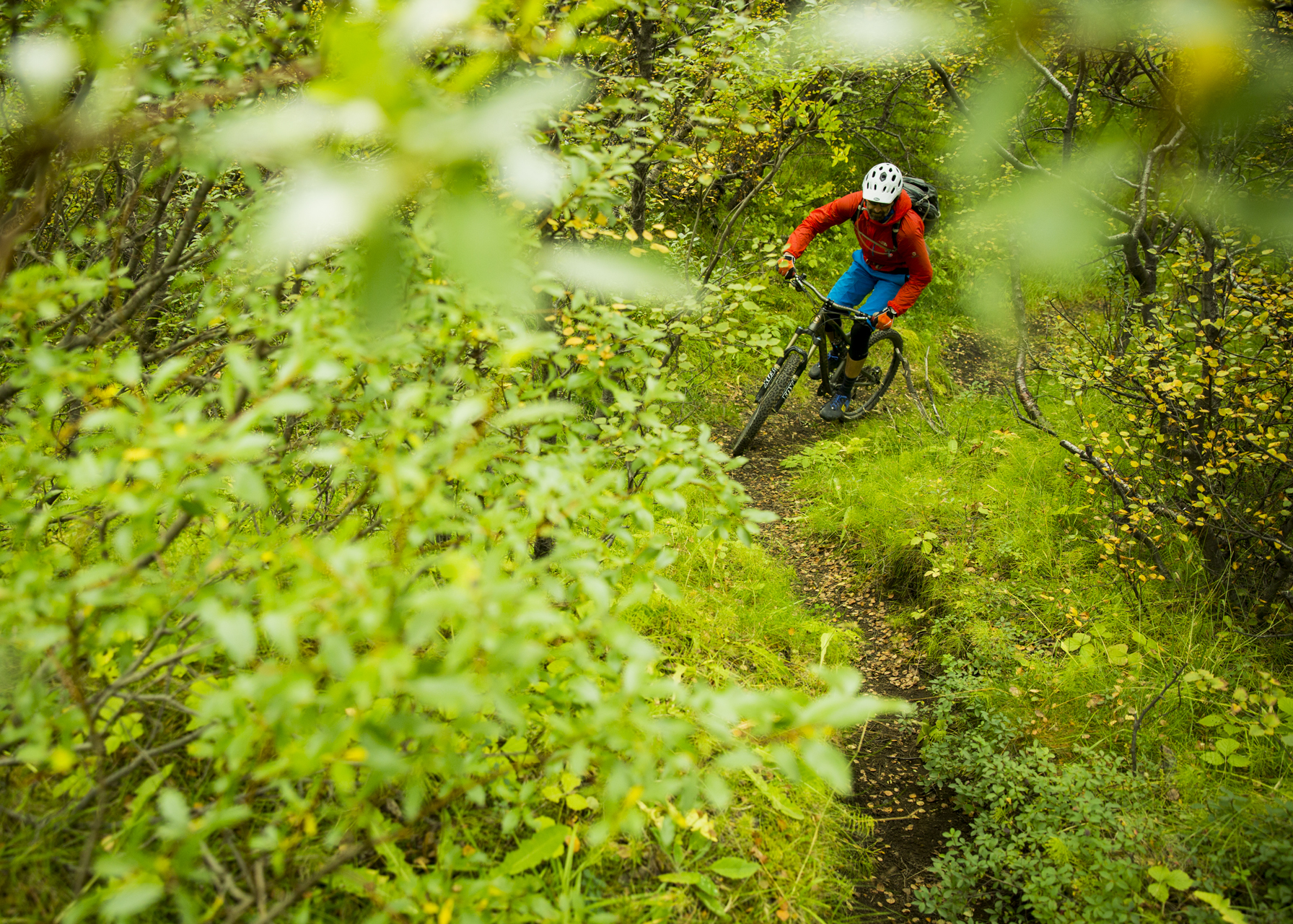 Just when we thought we had seen everything in Iceland, we pedaled through a birch forest on the approch to Þórsmörk.